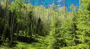 明亮的深绿色 免版税库存图片