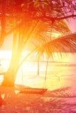明亮的热带可可椰子照片  免版税库存图片