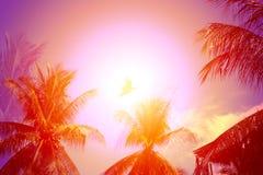 明亮的热带可可椰子照片  免版税库存照片