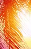 明亮的热带可可椰子照片  库存照片