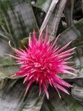 明亮的热带花 免版税库存照片