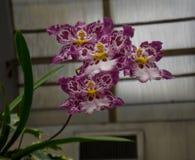 明亮的热带花 库存照片