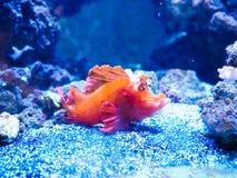 明亮的热带鱼n 免版税库存图片