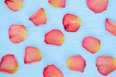 明亮的玫瑰花瓣 免版税图库摄影