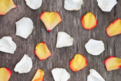 明亮的玫瑰花瓣 免版税库存图片