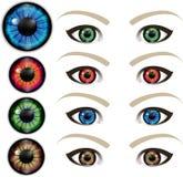 明亮的眼睛 库存例证