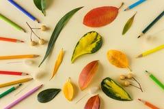 明亮的秋叶和色的铅笔在纸片说谎 免版税图库摄影
