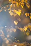 明亮的秋天叶子 库存照片