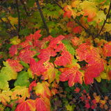 明亮的秋天叶子 免版税库存图片