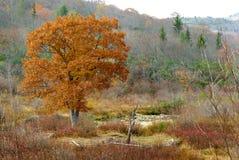 明亮的秋天树 免版税库存图片