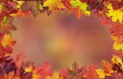 明亮的秋天槭树叶子卡片  库存图片