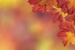 明亮的秋天槭树叶子卡片  库存照片