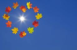 明亮的秋天槭树叶子卡片  免版税库存照片