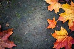 明亮的秋天槭树叶子 免版税库存图片