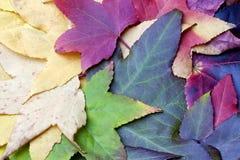 明亮的秋天秋天在样式把平展说谎留在 图库摄影