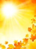 明亮的秋天背景 免版税库存图片