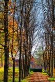 明亮的秋天路 免版税库存照片