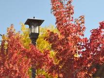 明亮的秋天颜色在大熊湖村庄 图库摄影