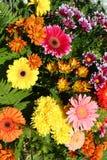 明亮的秋天颜色花卉背景  库存图片
