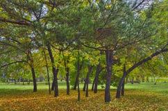 明亮的秋天风景在城市公园 免版税图库摄影
