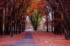 明亮的秋天 免版税库存图片