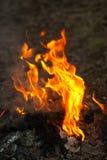 明亮的篝火在森林里 免版税库存照片