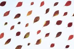 明亮的红色叶子 库存图片