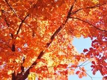 明亮的红色和桔黄色秋天叶子 库存照片