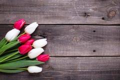 明亮的红色和白色郁金香在年迈的木背景开花 免版税图库摄影