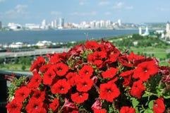 明亮的红色喇叭花花在城市公园 库存图片