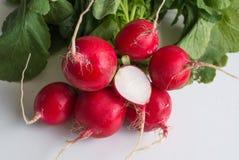 明亮的红色春天萝卜 库存图片
