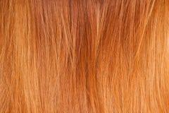 明亮的红色自然头发 免版税库存照片