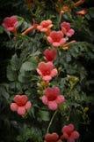 明亮的红色花在阳光下 免版税库存图片