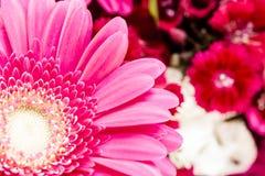 明亮的红色花从庭院的 库存图片
