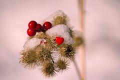 明亮的红色莓果和心脏 库存照片