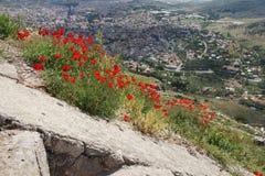 明亮的红色鸦片在希腊石废墟中增长 图库摄影