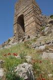 明亮的红色鸦片在希腊石废墟中增长 库存图片