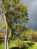 明亮的结构树 图库摄影