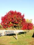 明亮的结构树 免版税库存图片