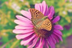 明亮的美丽的蝴蝶坐一朵桃红色花雏菊 背景概念框架沙子贝壳夏天 被定调子的图象 免版税库存图片