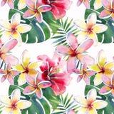 明亮的美好的绿色花卉草本热带可爱的夏威夷逗人喜爱的多色夏天样式的在牛排的热带黄色花 库存例证