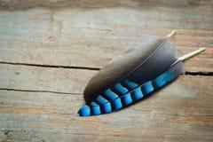 明亮的羽毛背景 免版税图库摄影