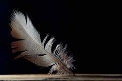 明亮的羽毛,在黑背景,拷贝空间的美好的patternd 免版税图库摄影
