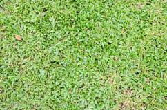 明亮的自然新绿草背景 免版税库存图片