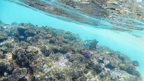 明亮的色的珊瑚礁在红海在洪加达,埃及,太阳 免版税库存照片