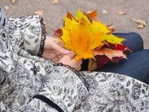 明亮的色的秋天槭树在妇女的手离开 槭树叶子在手上 翠菊许多秋天的紫红色心情粉红色 库存图片