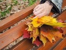 明亮的色的秋天槭树在妇女的手离开 槭树叶子在手上 翠菊许多秋天的紫红色心情粉红色 免版税库存照片