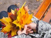 明亮的色的秋天槭树在妇女的手离开 槭树叶子在手上 翠菊许多秋天的紫红色心情粉红色 免版税库存图片