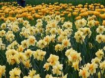 明亮的花圃 免版税库存照片