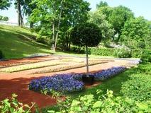 明亮的花在公园增长在petergof公园  免版税库存图片